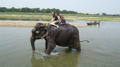 Nepal Chitwan Bain Elephant