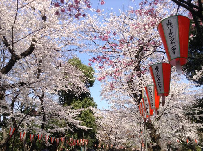 Tokyo Sakura Ueno MSDV